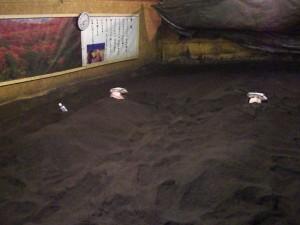 パワーパップした土俵型こめ糠酵素風呂
